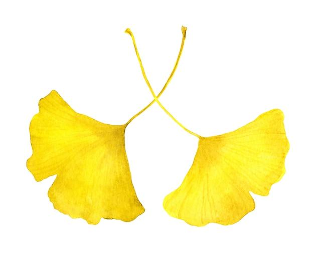 Herfst gele ginkgo bladeren. aquarel seizoensgebonden illustratie