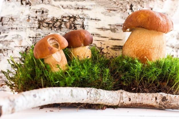 Herfst gestileerde compositie van witte champignons op de achtergrond van berkenschors.