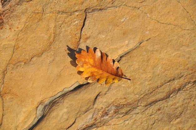 Herfst gevallen eikenblad op steen in fel zonlicht