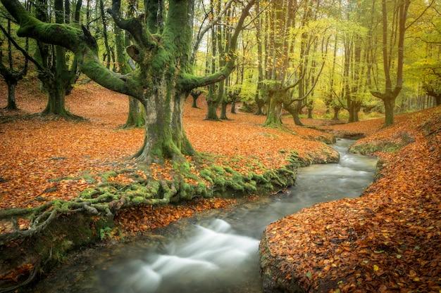Herfst groen beukenbos otzarreta rivier