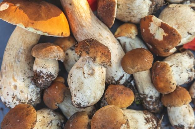 Herfst herfst samenstelling rauwe eetbare paddenstoelen penny bun op donkere zwarte stenen leisteen achtergrond eekhoorntjesbrood ove...