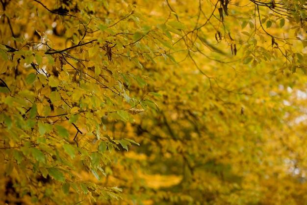 Herfst herfstbladeren achtergrond landschap in herfstseizoen
