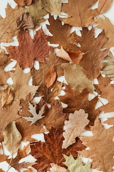 Herfst, herfstsamenstelling. mooi van bruin, oranje, beige gedroogde bladeren