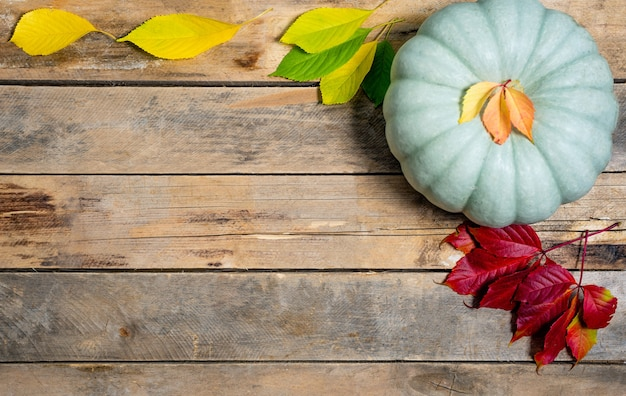 Herfst hout met geel-rode en groene bladeren en pompoen.