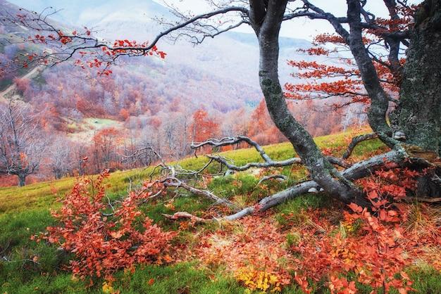 Herfst in de karpaten. fantastisch uitzicht in oktober.