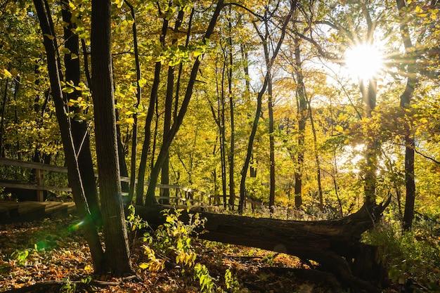 Herfst in het bos over een omgevallen boom met de ondergaande zon.