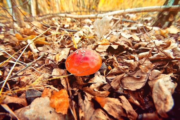 Herfst in het bos. toadstool.