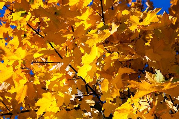 Herfst in het park, bomen en gebladerte in de herfst, de locatie - een park,