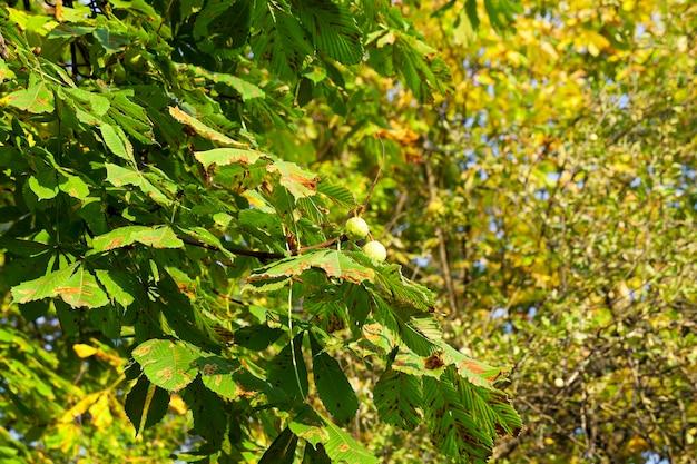 Herfst in het park - gefotografeerde bomen en gebladerte in de herfst, de locatie - een park,