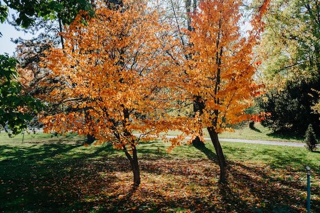Herfst in het prachtige park
