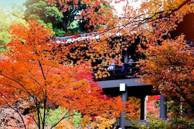 Herfst in japan, kleurrijke bladeren rond het park.