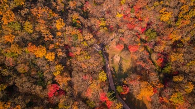 Herfst in seoul