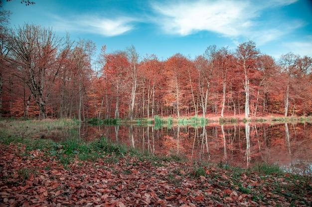 Herfst kleur bos met meer