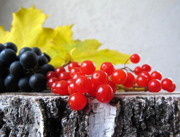 Herfst kleurrijk stilleven zwarte druiven rode bessen van viburnum en gele esdoornbladeren op de berk