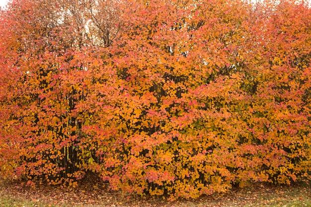 Herfst kleurrijke bomen en gevallen bladeren