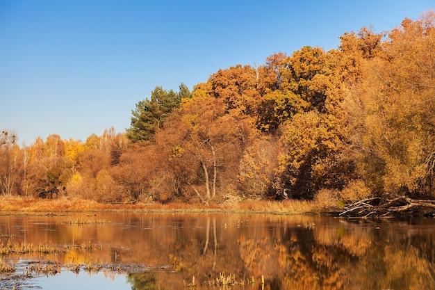 Herfst landschap. bomen langs een kalme rivier met weerspiegeling in het water.
