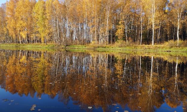 Herfst landschap. bomen met geel gebladerte.