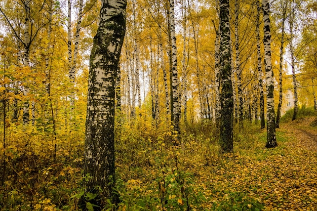 Herfst landschap met bomen met gele bladeren in het park.