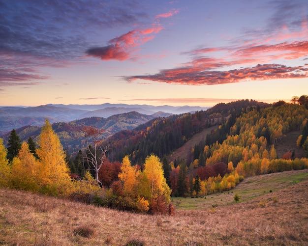 Herfst landschap met een prachtig bos in de bergen