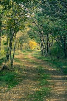 Herfst landschap met landelijke weg in een bos