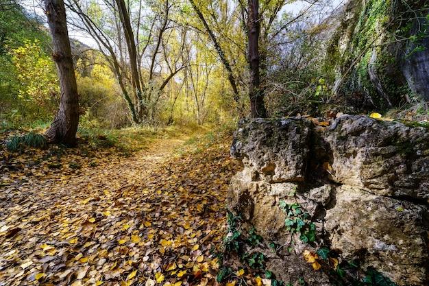 Herfst landschap. pad in het bos met lichten en schaduwen. tapijt van gevallen bladeren en magisch en betoverd bos. rots in het pad.
