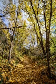 Herfst landschap. pad in het bos met lichten en schaduwen. tapijt van gevallen bladeren en magisch en betoverd bos. segovia, spanje.