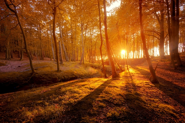 Herfst landschap. prachtige goudval in bos.