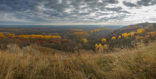 Herfst landschap. uitzicht op het bos met geel gebladerte tegen het oppervlak van een bewolkte hemel.