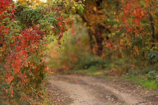 Herfst landschap van weg in het park