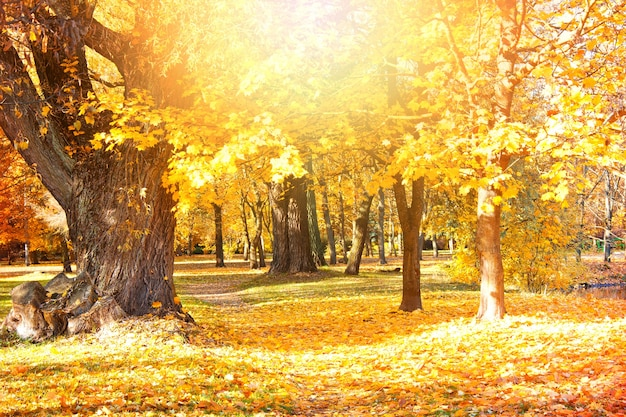 Herfst landschap.