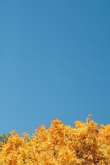 Herfst natuur landschap. zonnige dag. gele boomkronen over blauwe hemel.