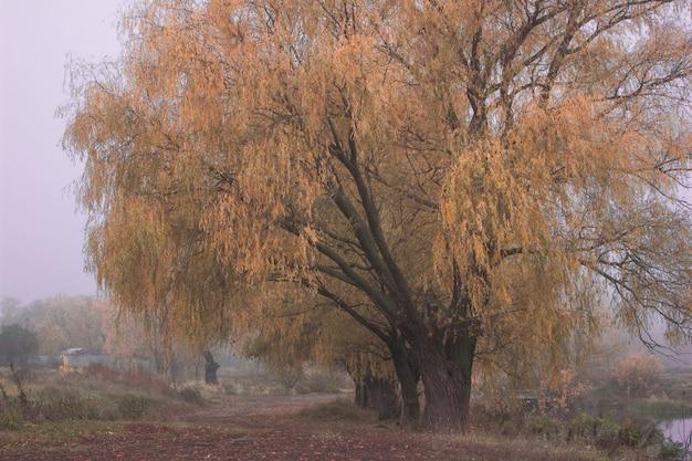 Herfst november landschap. mistige herfst park met vallende droge herfstbladeren. het herfstseizoen, de kleurrijke mistige scène van het de herfstlandschap