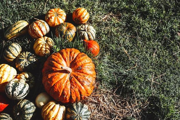 Herfst oogst kleurrijke pompoenen in verschillende variëteiten op boerderijmarkt of seizoensfestival