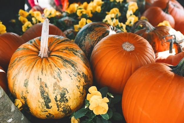 Herfst oogst kleurrijke pompoenen verschillende variëteiten op boerderijmarkt of seizoensfestival