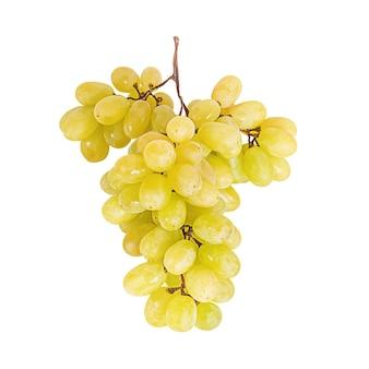Herfst oogst rijpe druiven. tros druiven geïsoleerd op een witte achtergrond.