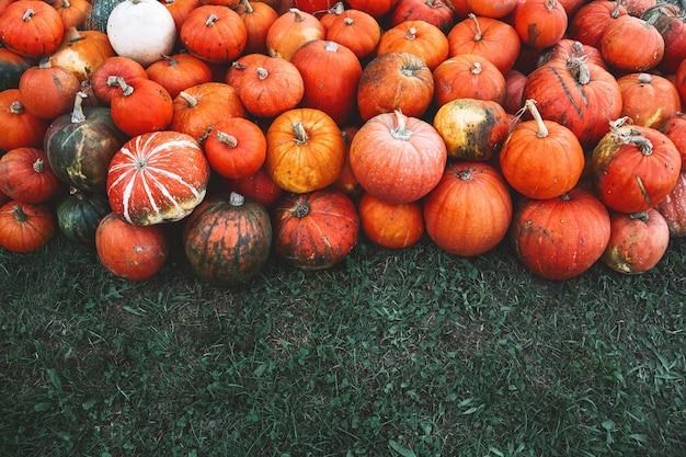 Herfst oogst van pompoenen stapel oranje pompoenen op boerderijmarkt