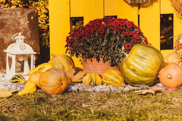 Herfst oogstfeest - mand met herfstfruit, oude koffer, pompoenen en kleurrijke herfstbloemen. landschapsontwerp in de landelijke stijl voor het herfstseizoen.