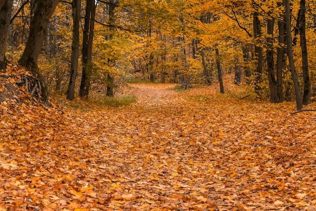 Herfst pad in het bos bedekt met gouden bladeren