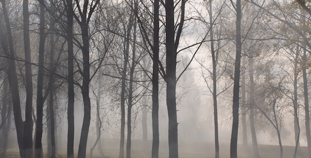 Herfst park met mysterie mist