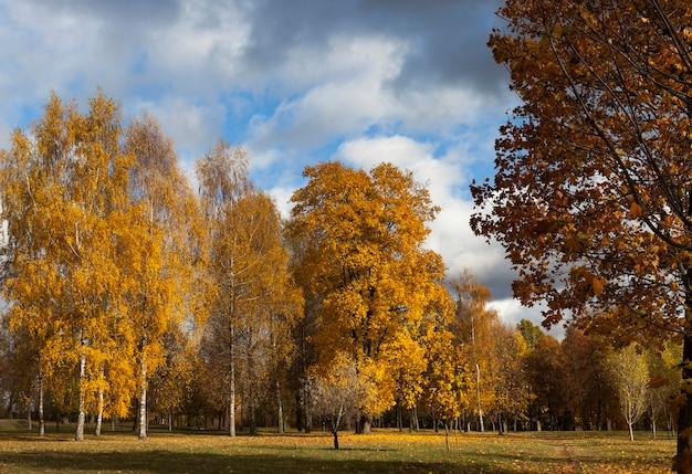 Herfst park Premium Foto