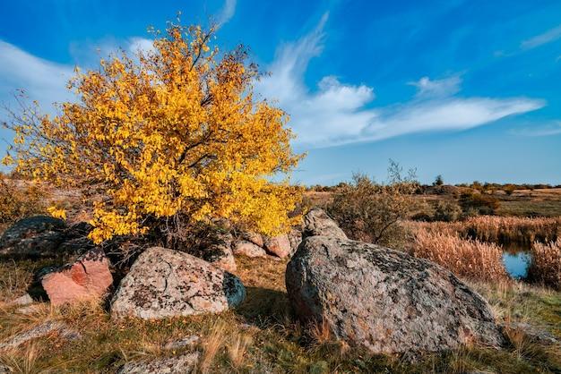 Herfst prachtige vergeelde vegetatie en grijze stenen bedekt met veelkleurig korstmos en mos in de natuur van heuvels en pittoresk oekraïne