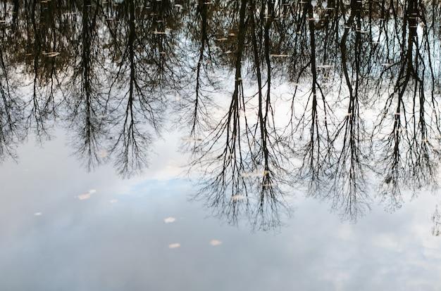 Herfst rustige weerspiegeling van naakte kale bomen weerspiegeld ondersteboven in kalme donkere waterspiegel
