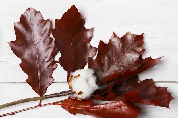 Herfst samenstelling. gedroogde tak van rode eikenbladeren en katoen bloem, bovenaanzicht, close-up op wit hout.
