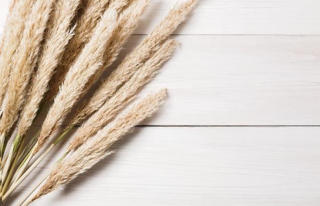 Herfst samenstelling. gedroogde witte pluizige lisdodde of typha bloem bovenaanzicht op wit hout. floral samenstelling