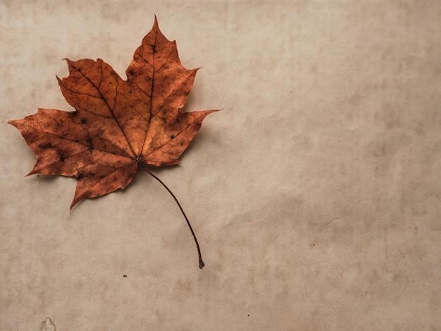 Herfst samenstelling. geel en gouden herfstblad