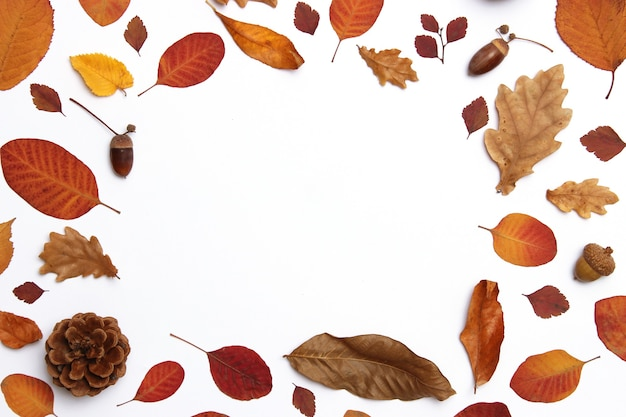 Herfst samenstelling van bladeren op een witte achtergrond bovenaanzicht