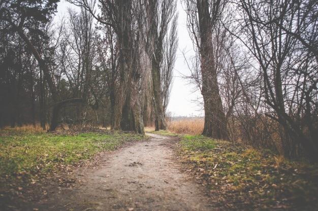 Herfst seizoen pad