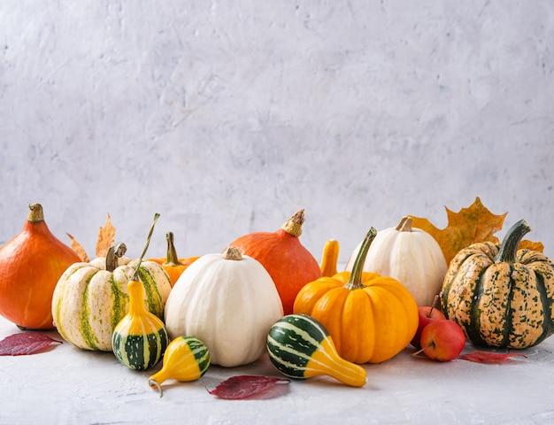 Herfst stilleven. de samenstelling van verschillende kleurrijke decoratieve pompoenen op witte tafel.