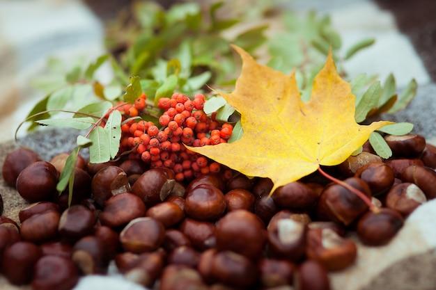 Herfst stilleven lijsterbes esdoornblad een verstrooiing van kastanjes