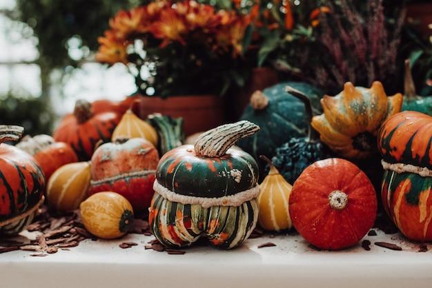 Herfst stilleven met kleurrijke pompoenen en seizoensbloemen